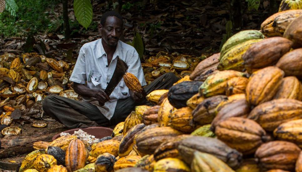 Cocoa Bean Farmers Taste Chocolate